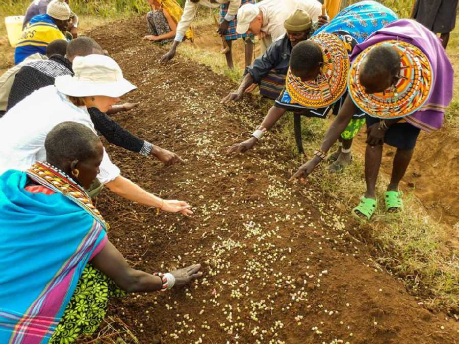 7 Nonprofit Organizations Changing their Communities through Permaculture